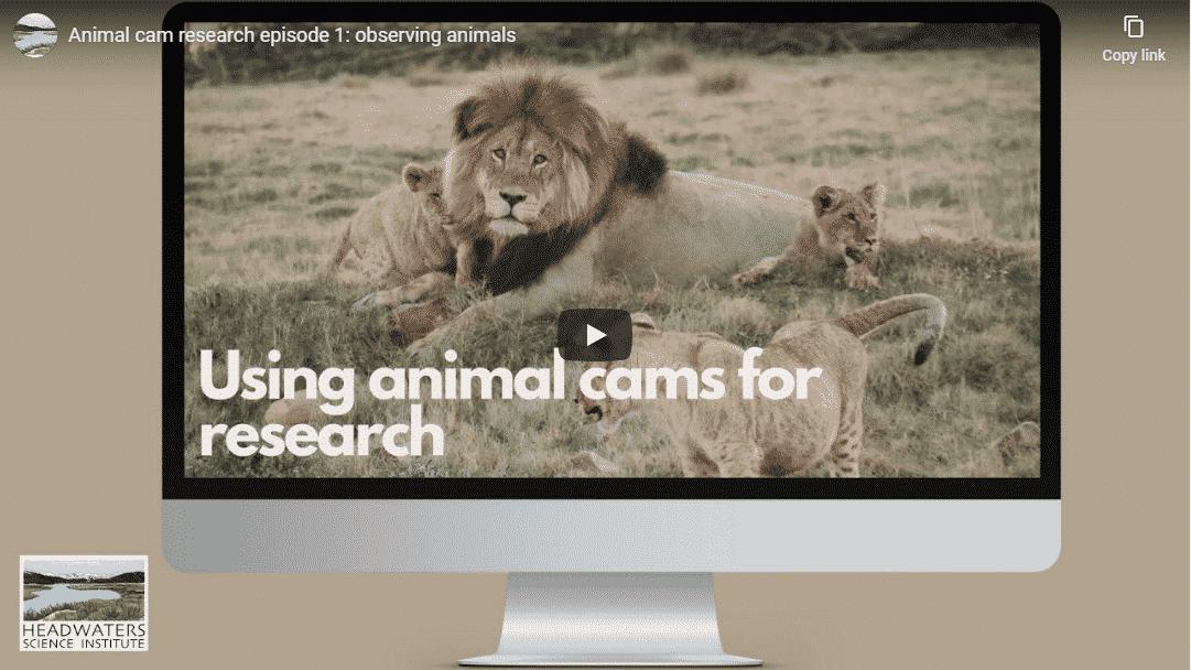 Animal Cam Series Episode 1 | Observing Animals