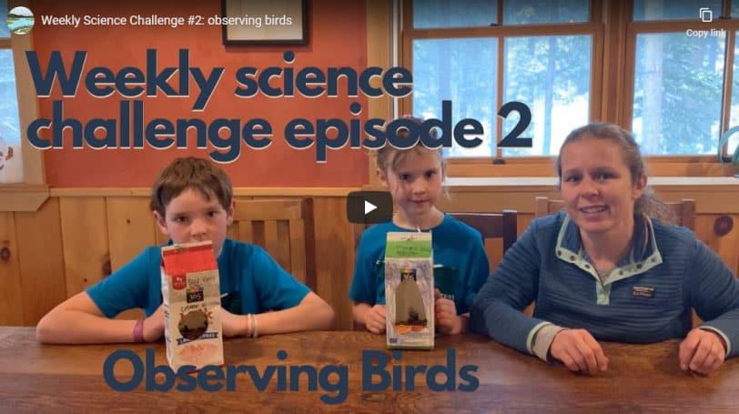 Science Challenge: Observing Birds