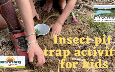 Fun Science Friday: Insect Pit Traps