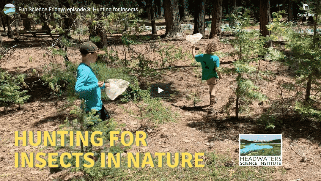 Fun Science Friday: Hunting For Insects