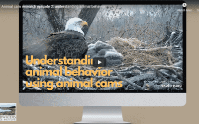 Animal Cam Series Episode 2 | Understanding Animal Behavior