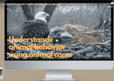 Animal Cam Series Episode 2 | Understanding Animal Behavior