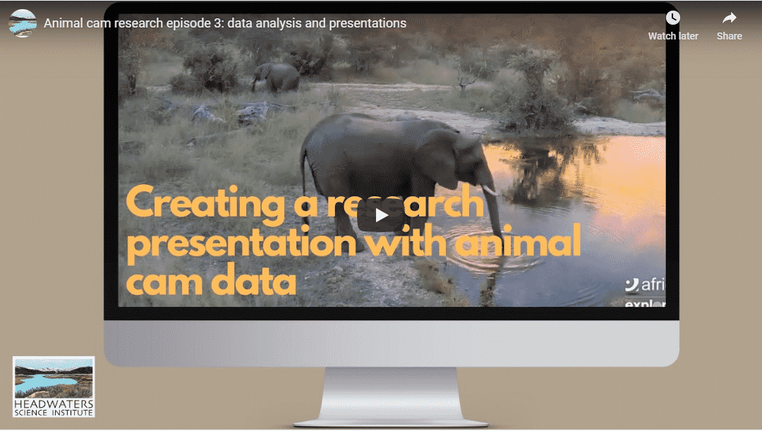 Animal Cam Series Episode 3 | analyzing data and creating a presentation