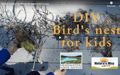 Science Challenge: Birds Nest