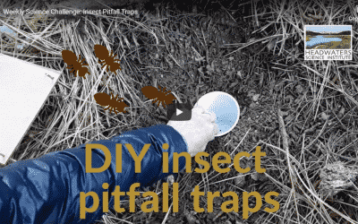 Science Challenge: Insect Pitfall Traps