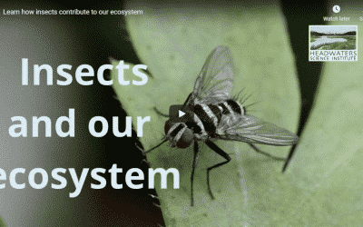 Insect Populations Lesson Packet