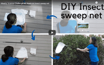 Science Challenge:  Make an Insect Sweep Net