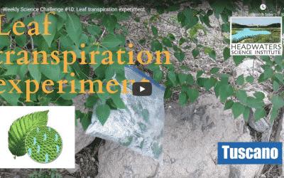 Science Challenge: Leaf Transpiration
