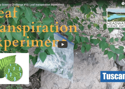 Science Challenge: Leaf Transpiration