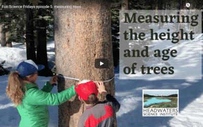 Fun Science Friday: Measuring Trees