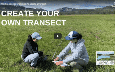 Science Challenge:  Make a Transect