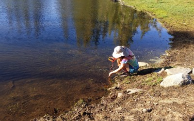 Headwaters Summer Research Experience