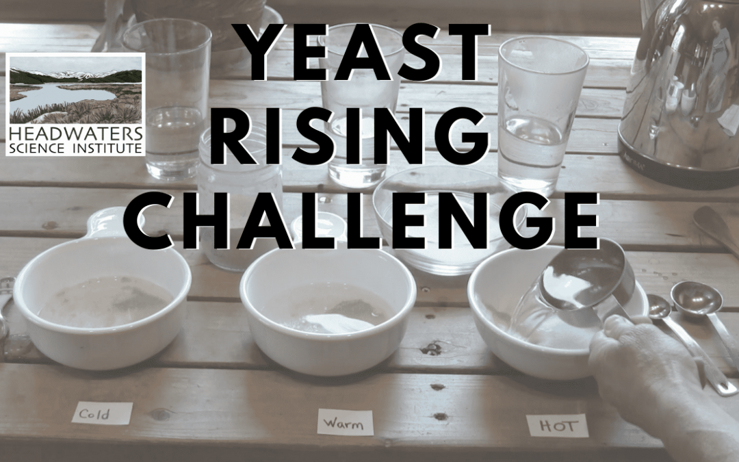 Weekly Science Challenge: Yeast rising