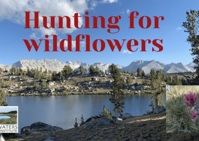 Fun Science Fridays: Hunting for wildflowers