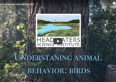 Behavioral Ecology: Bird Behavior
