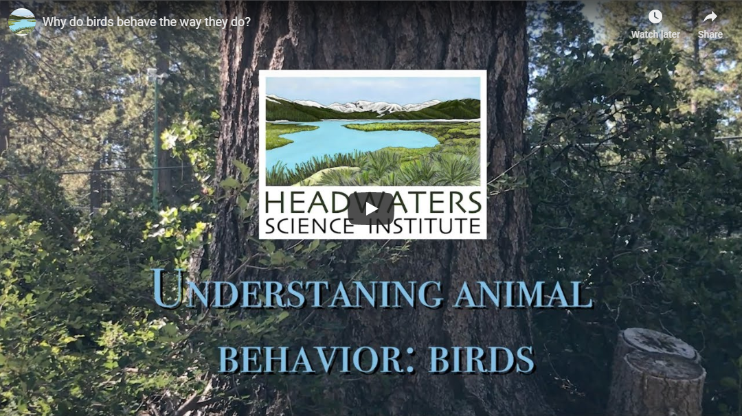 Behavioral Ecology: Bird Behavior Lesson Packet