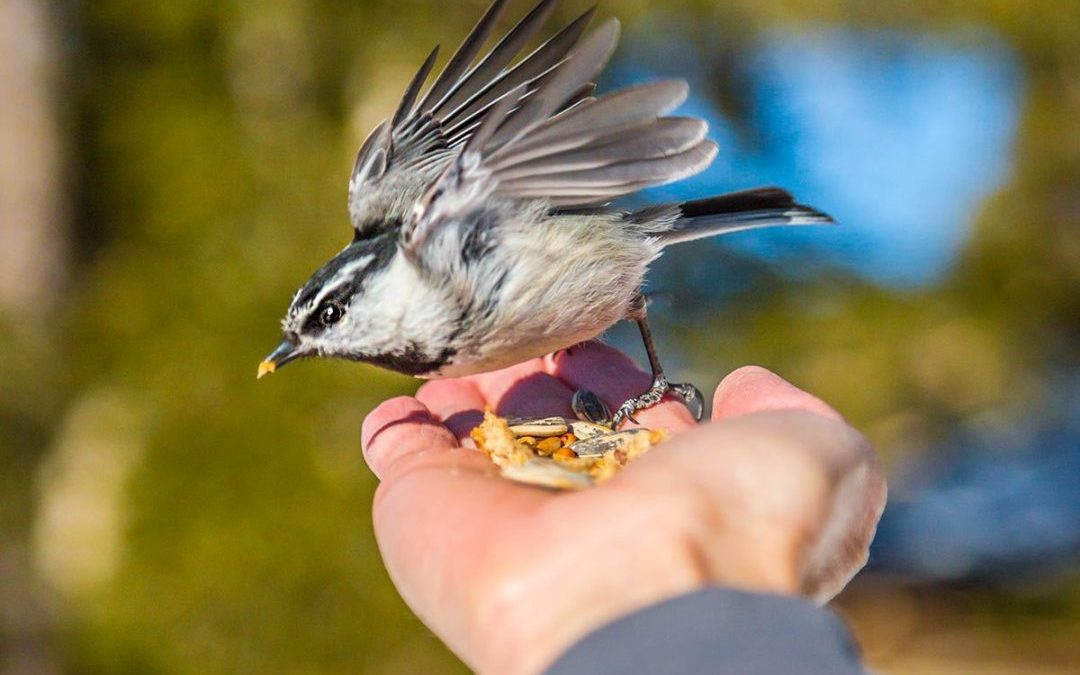 Science Packet: Behavioral ecology and how birds behave