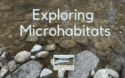 Fun Science Fridays: Exploring Microhabitats