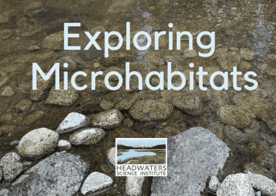 Fun Science Fridays: Exploring Microhabitats