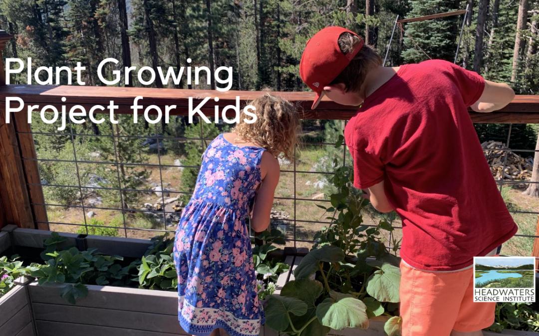 Fun Science Fridays: Growing Plants