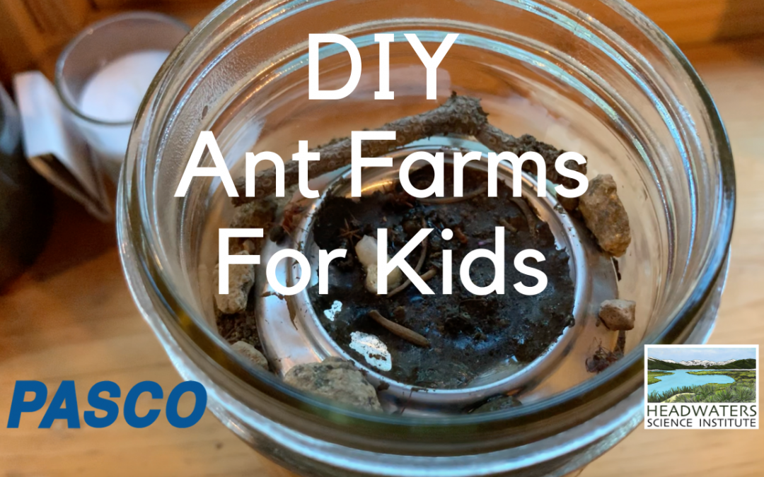 Fun Science Fridays: Ant farms