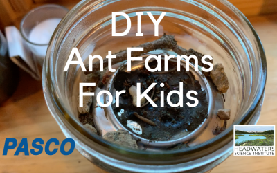 Fun Science Fridays: Ant farms