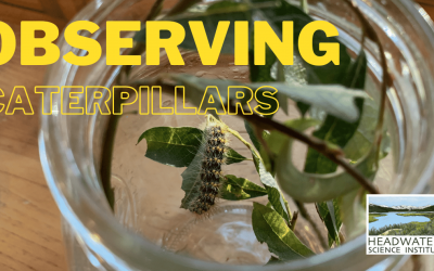 Fun Science Fridays: Observing Caterpillars