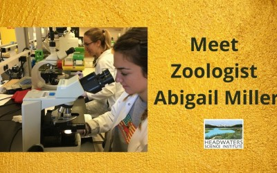 Lunch With A Scientist: Abby Miller on infectious disease in amphibians