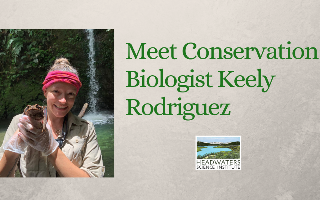 Lunch With A Scientist: Keely Rodriguez on disease in frogs